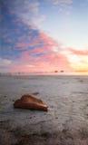 Foglia sulla sabbia Fotografia Stock