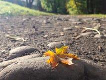 Foglia sulla terra Fotografie Stock