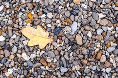 Foglia sulle pietre Fotografia Stock