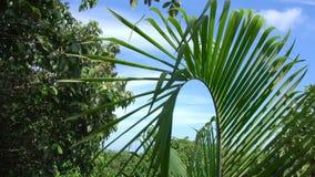 Foglia Tremling della palma in vento stock footage