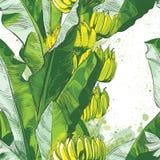 Foglia tropicale della banana di vettore, struttura di frutti illustrazione di stock