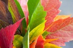 Foglia variopinta di autunno Fotografie Stock Libere da Diritti