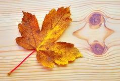 Foglia variopinta di autunno su fondo di legno Immagini Stock