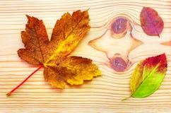 Foglia variopinta di autunno su fondo di legno Fotografie Stock Libere da Diritti