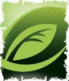 Foglia verde Immagini Stock Libere da Diritti