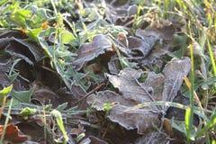 Foglia verde in autunno fotografia stock