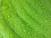 foglia verde con acqua di goccia Immagini Stock Libere da Diritti