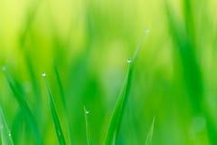 Foglia verde con il fondo delle gocce di acqua Fotografia Stock