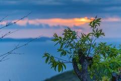 Foglia verde con il fondo di tramonto dell'oceano Immagini Stock