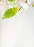 Foglia verde con le gocce di acqua della pioggia e bokeh su fondo leggero, posto per testo, natura Fotografia Stock