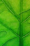 Foglia verde con le gocce di acqua sulla superficie Immagini Stock Libere da Diritti