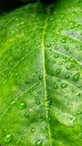 Foglia verde con le goccioline Immagine Stock