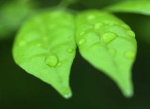 Foglia verde con waterdrop immagine stock libera da diritti