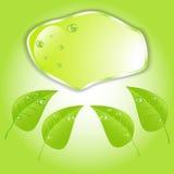 Foglia verde con spazio per testo Vettore EPS10 Fotografie Stock