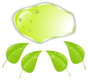 Foglia verde con spazio per testo Vettore EPS10 Fotografia Stock