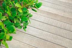 Foglia verde con struttura del pavimento, plancia di legno nel giardino Fotografia Stock