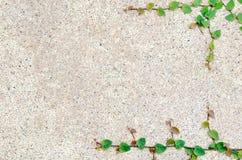 Foglia verde con struttura della sabbia Fotografia Stock Libera da Diritti