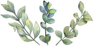 Foglia verde del legno di bosso Fogliame floreale del giardino botanico della pianta della foglia Fotografia Stock Libera da Diritti