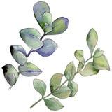 Foglia verde del legno di bosso Fogliame floreale del giardino botanico della pianta della foglia Fotografia Stock