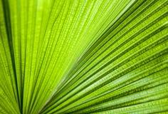 Foglia verde del primo piano Immagine Stock