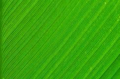 Foglia verde dell'albero Immagini Stock Libere da Diritti