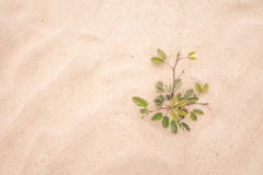 Foglia verde dell'albero sulla spiaggia di sabbia Immagine Stock Libera da Diritti