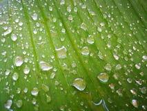 Foglia verde della banana con goccia di acqua immagini stock