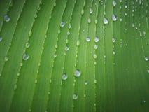 Foglia verde della banana con goccia di acqua fotografie stock libere da diritti