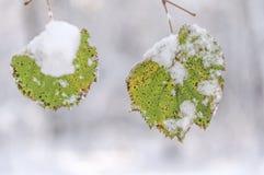 Foglia verde della foresta coperta di ramo del gelo con il campo basso Fotografie Stock Libere da Diritti