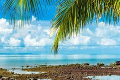 Foglia verde della noce di cocco con il mare del ond del cielo di bellezza nel fondo Immagine Stock