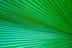 Foglia verde della palma per fondo Fotografie Stock Libere da Diritti