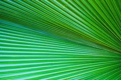 Foglia verde della palma per fondo Fotografia Stock Libera da Diritti