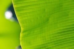 Foglia verde di estate Fotografie Stock