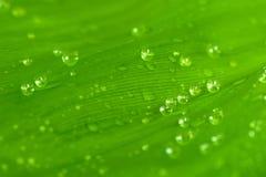 Foglia verde dopo la pioggia Immagini Stock Libere da Diritti