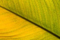 Foglia verde e gialla ad un angolo diagonale fotografia stock libera da diritti