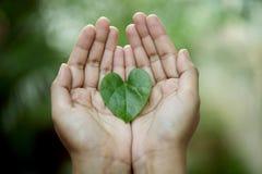 Foglia verde a forma di del cuore Fotografia Stock Libera da Diritti
