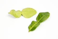 Foglia verde fragrante della calce del limone Fotografie Stock Libere da Diritti