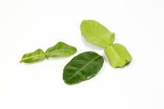 Foglia verde fragrante della calce del limone Immagine Stock