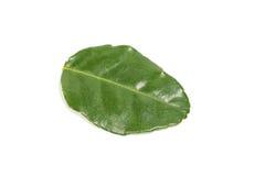 Foglia verde fragrante della calce del limone Fotografie Stock