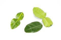 Foglia verde fragrante della calce del limone Fotografia Stock