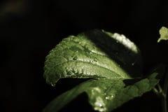 Foglia verde fresca con il fondo dell'ombra immagine stock libera da diritti