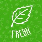 Foglia verde fresca della menta su fondo senza cuciture Fotografia Stock