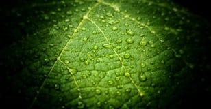 Foglia verde in giardino dopo pioggia Immagini Stock