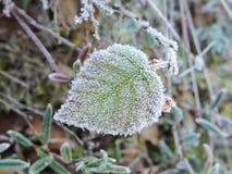 Foglia verde nel gelo Fotografie Stock