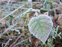 Foglia verde nel gelo, Lituania Fotografia Stock Libera da Diritti