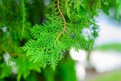 Foglia verde nel giardino Fotografie Stock Libere da Diritti