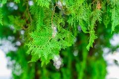Foglia verde nel giardino Fotografia Stock Libera da Diritti