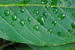 Foglia verde nelle goccioline di acqua fotografie stock libere da diritti