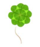 Foglia verde a quattro foglie del trifoglio Fotografia Stock