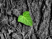 Foglia verde sopra la corteccia in bianco e nero, concetto di ecologia Fotografie Stock
